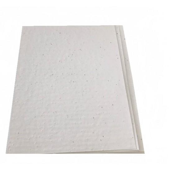 Ensemble de 10 feuilles de papiers ensemencés